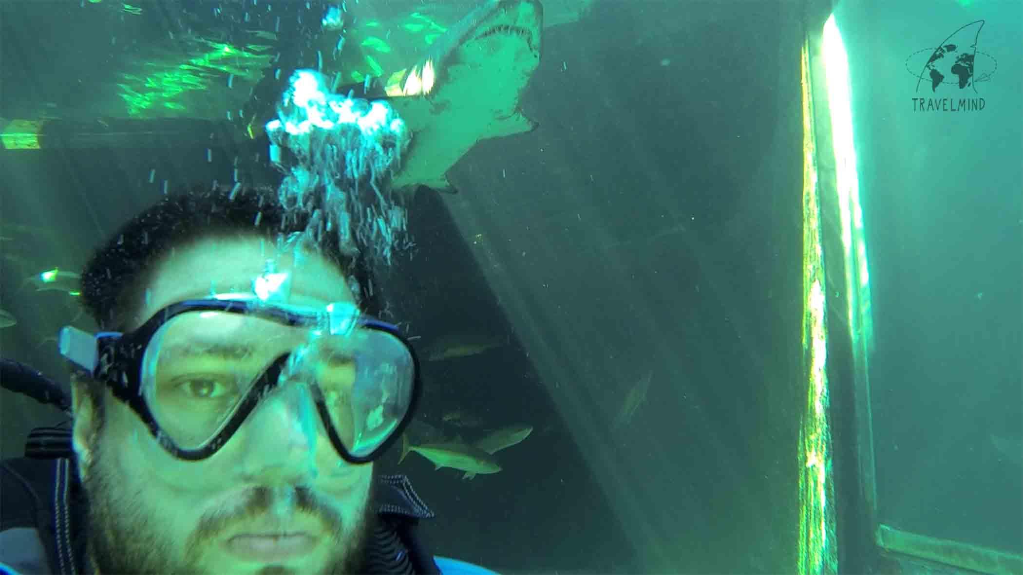 Sandtigerhai2