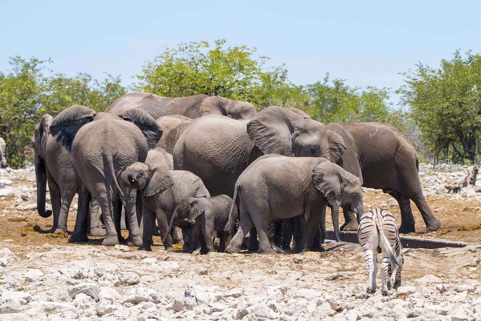 Elefant Kreis 2