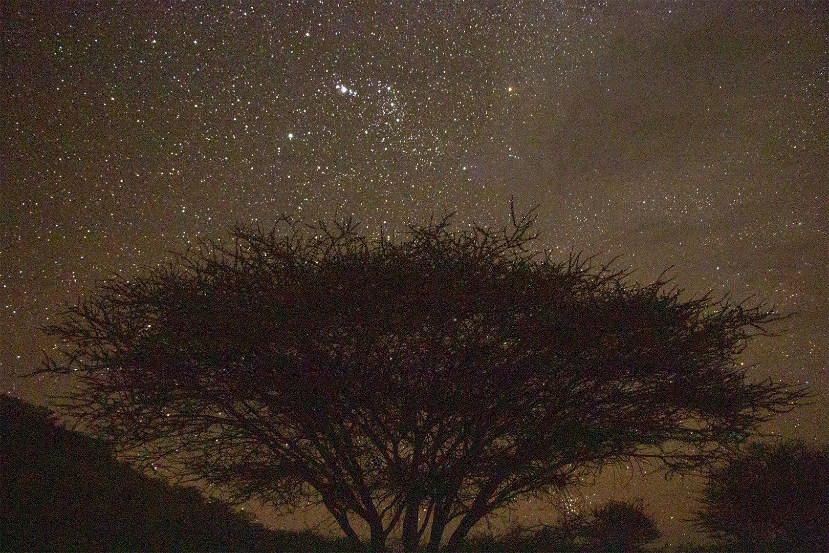 Stars&Tree2