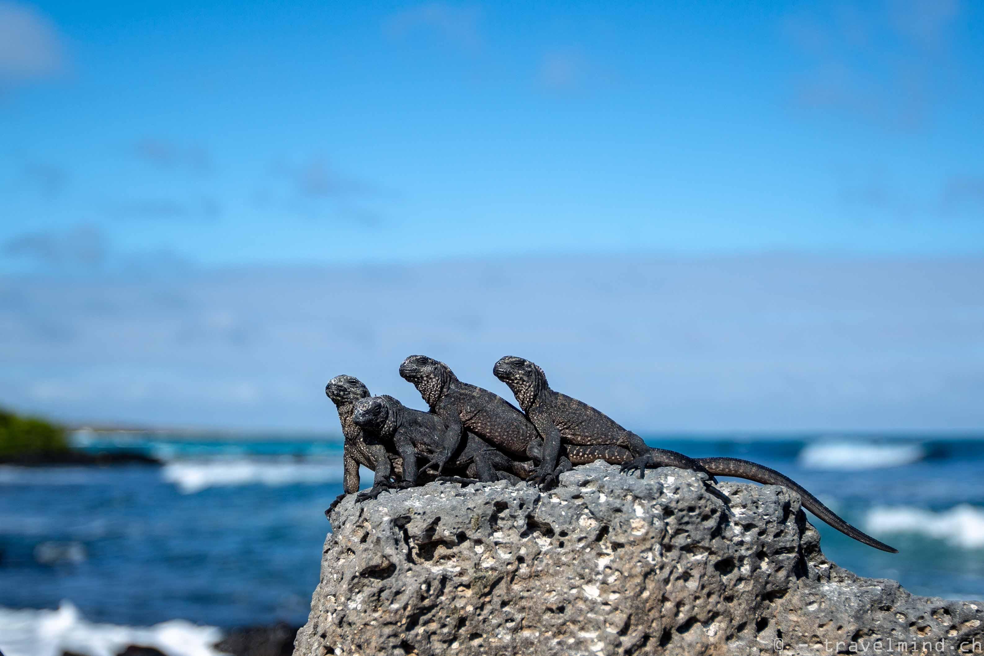 Galapagos Blog 1 (23 von 29)