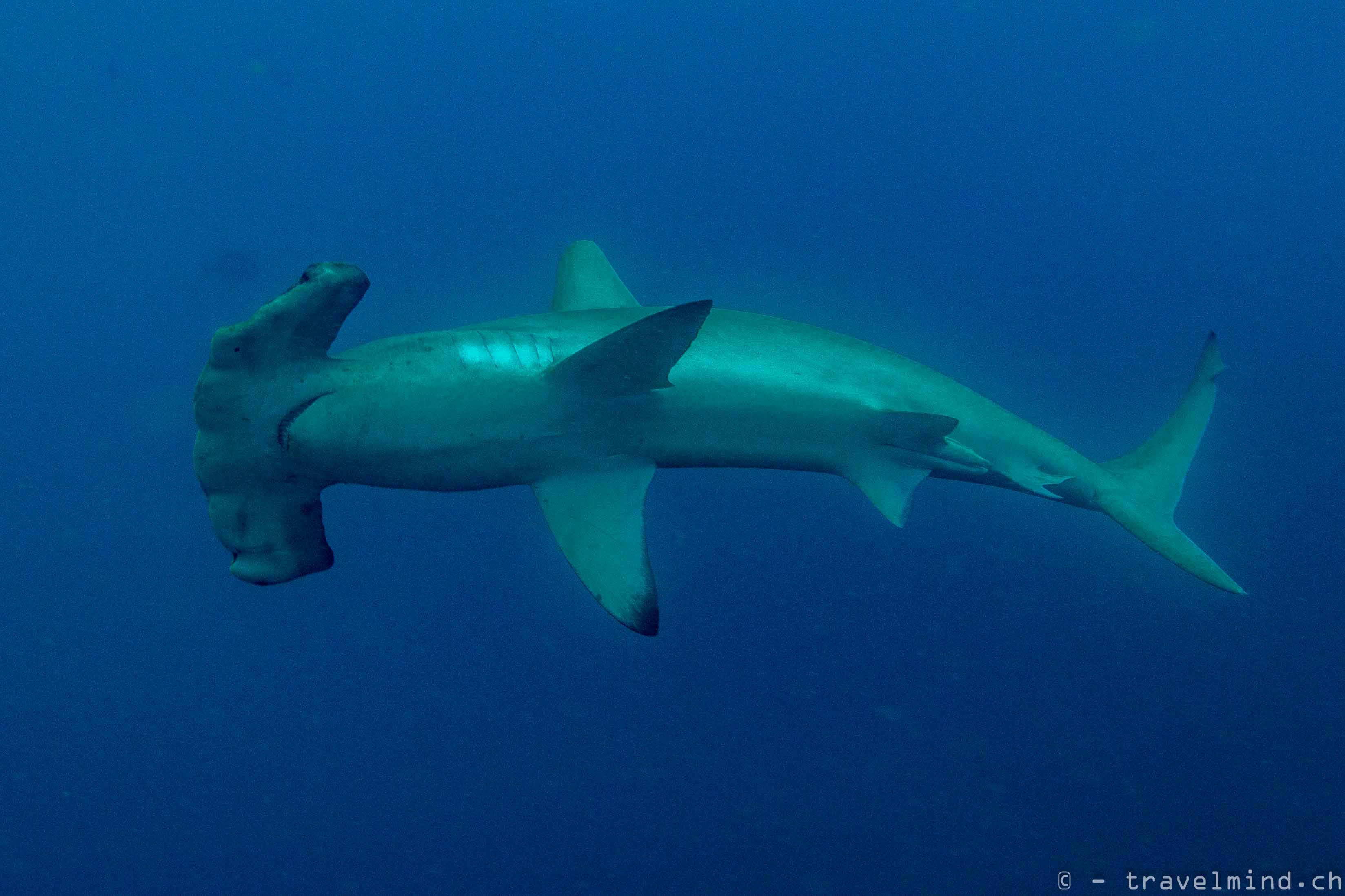 Galapagos Blog 1.2 (7 von 21)